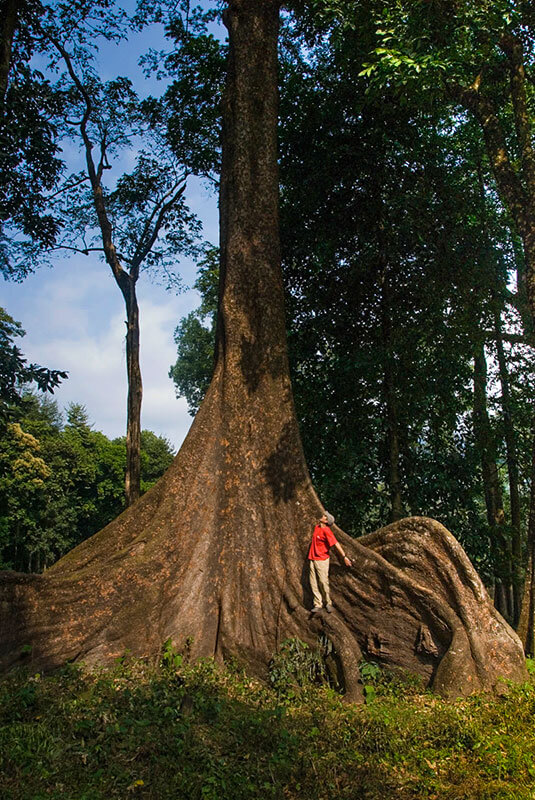 Person standing on the roots of a giant tree in Bhutan